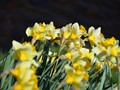 Inverness_spring_2014_022